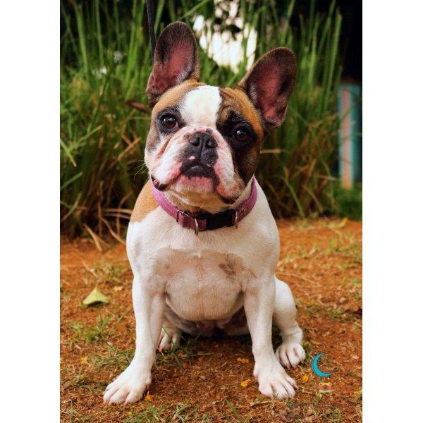 Empresa de Adestradores Onde Tem no Alto da Mooca - Adestrador de Cães em São Bernardo