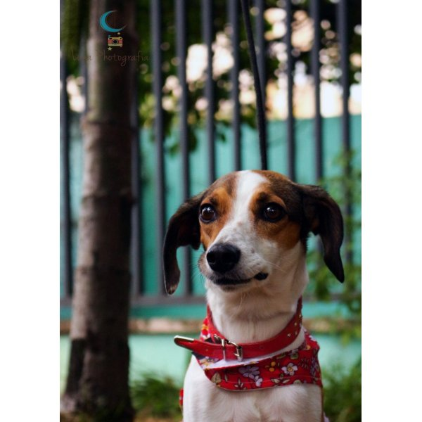 Empresa de Adestradores Preço no Alto de Pinheiros - Adestrador de Cães em São Bernardo