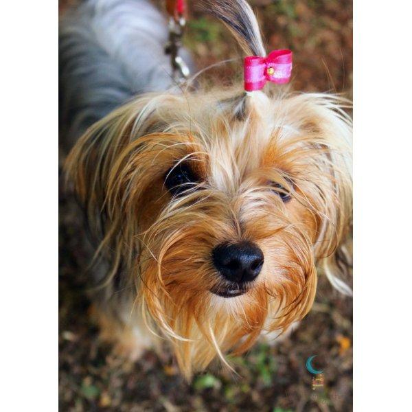 Empresa de Adestradores Valor na Boa Vista - Adestrador de Cães em São Bernardo