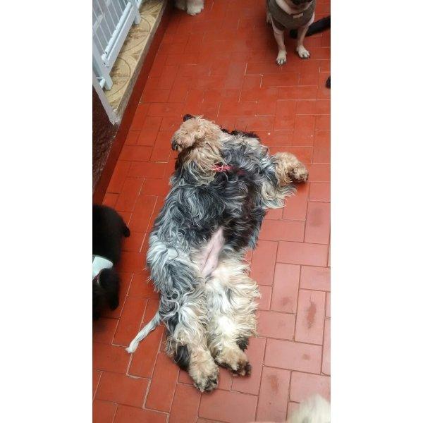 Empresa de Dogsitter na Vila Bandeirantes - Serviço de Babá de Cachorros Filhotes