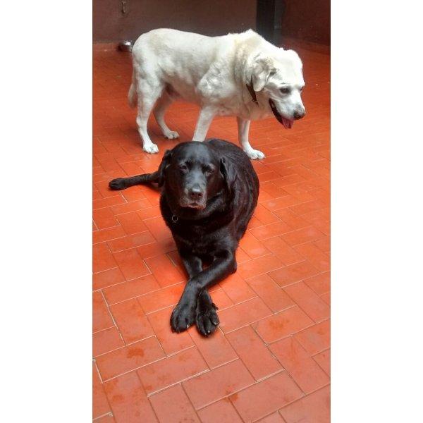 Empresas Dogsitter na Vila Curuçá - Serviço de Babá de Cachorros Filhotes