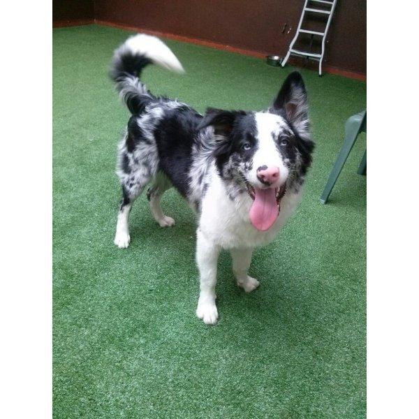 Hospedagem Canina na Oswaldo Cruz - Hotel para Cães no Bairro Olímpico