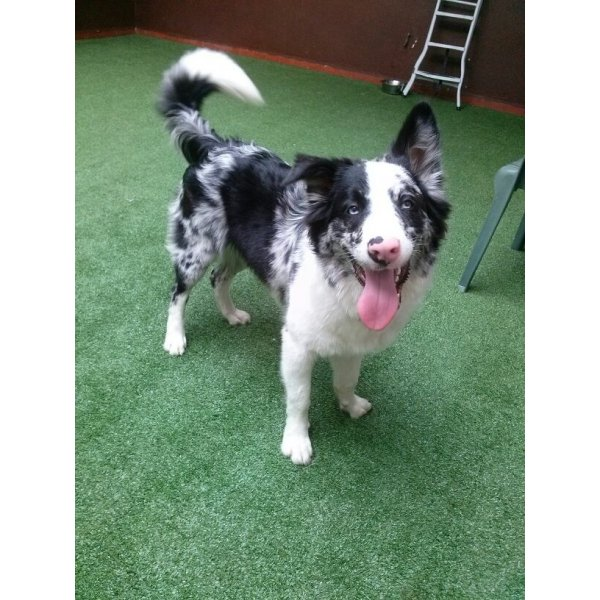 Hospedagem Canina no Jardim Haia do Carrão - Hotel para Cães em Santo André