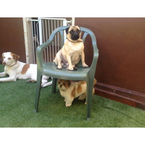 Hospedagem Canina Onde Encontrar na Vila Tramontano - Hotelzinho de Cães