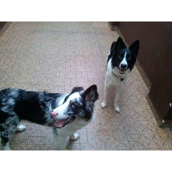 Hospedagem Canina Preço na Vila Oratório - Hotelzinho de Cães