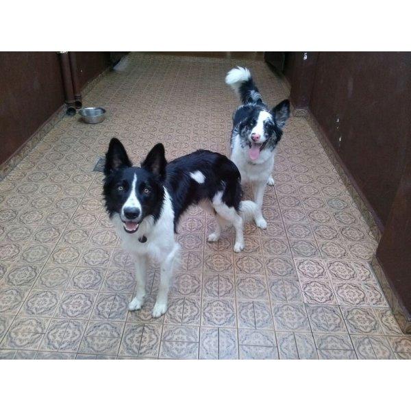 Hospedagem Canina Preços na Vila Clotilde - Hotel para Cães no Bairro Olímpico