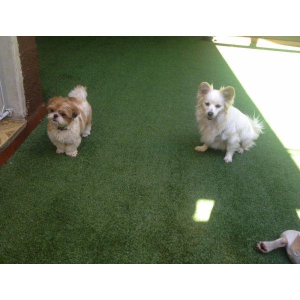 Hospedagem Canina Quanto Custa em Média na Vila Cristália - Hotelzinho de Cães