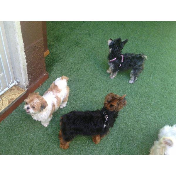 Hospedagem Canina Quanto Custa no Jardim Natália - Hotel para Cães no Bairro Olímpico
