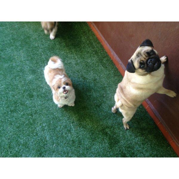 Hospedagem Canina Valores no Jardim Renata - Hotel Canil
