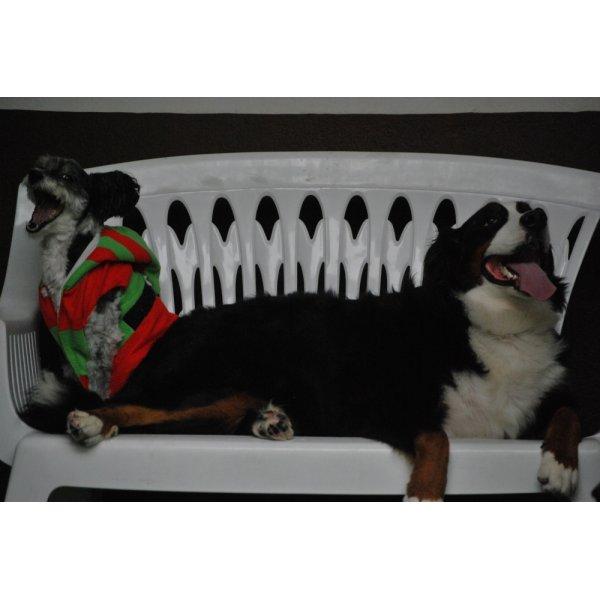 Hotéis para Cães na Vila Brasílio Machado - Hotel para Cães no Bairro Jardim