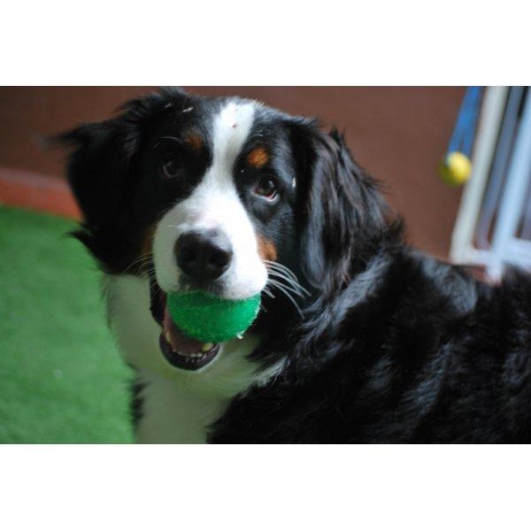 Hotéis para Cães Preço em Santo Amaro - Hotel para Cães em São Caetano