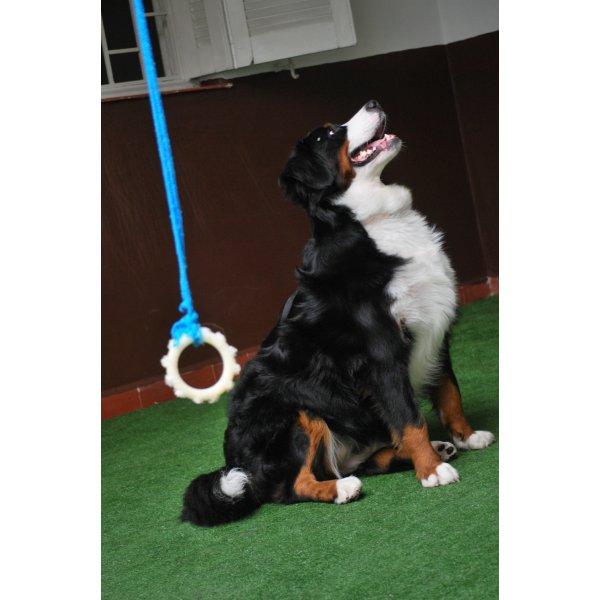 Hotéis para Cães Preços na Vila Conde do Pinhal - Hotel para Cães no Bairro Jardim