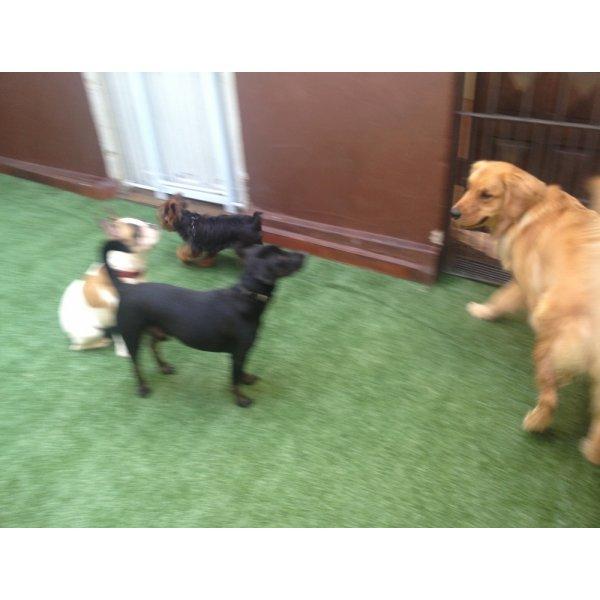 Hotéis para Cães Quanto Custa no Alto Santo André - Hotelzinho para Cachorro