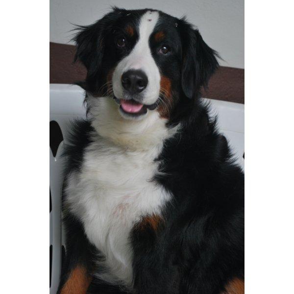 Hotéis para Cães Valor na Chácara Pouso Alegre - Hotel para Cães em São Caetano