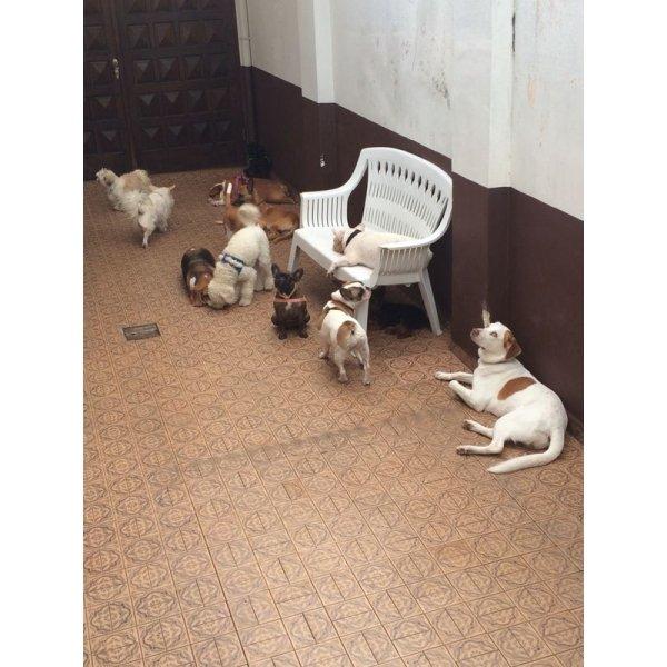 Hotel Dog Contratar na Bairro Casa Branca - Hotel para Cães em São Caetano