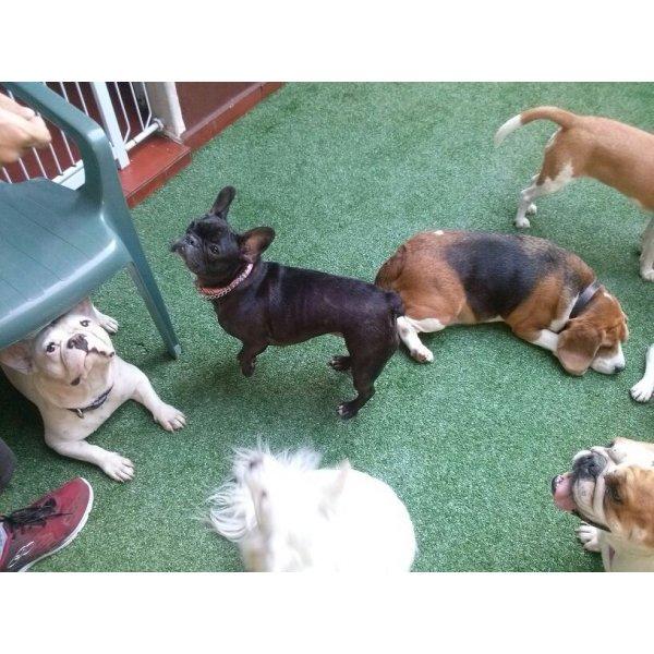Hotel Dog no Paulicéia - Hotel para Cães em São Caetano