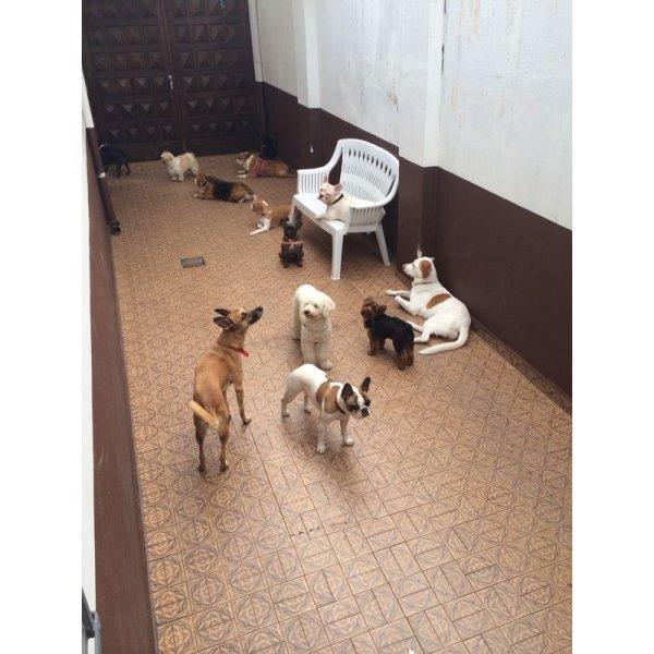 Hotel Dog Onde Encontro na Vila Clotilde - Hotel para Cães no Bairro Jardim