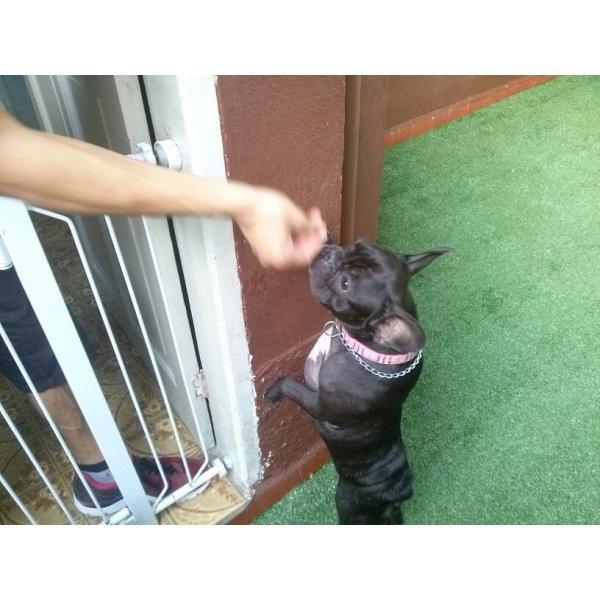 Hotel Dog Onde Tem no Jardim São Eduardo - Hotel para Cães em São Caetano