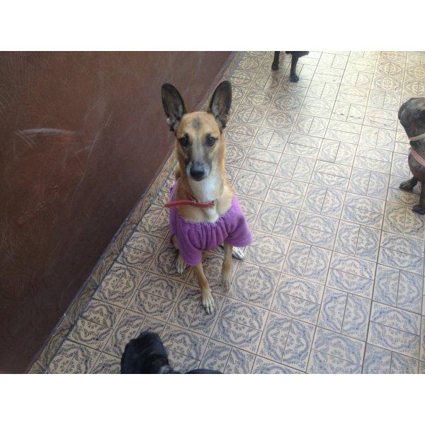 Hotel para Cachorro na Vila Guaraciaba - Hotel Canil