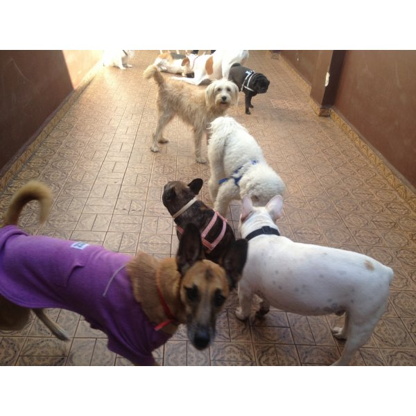 Hotel para Cachorro Preço no Jardim Guanabara - Hotelzinho de Cães