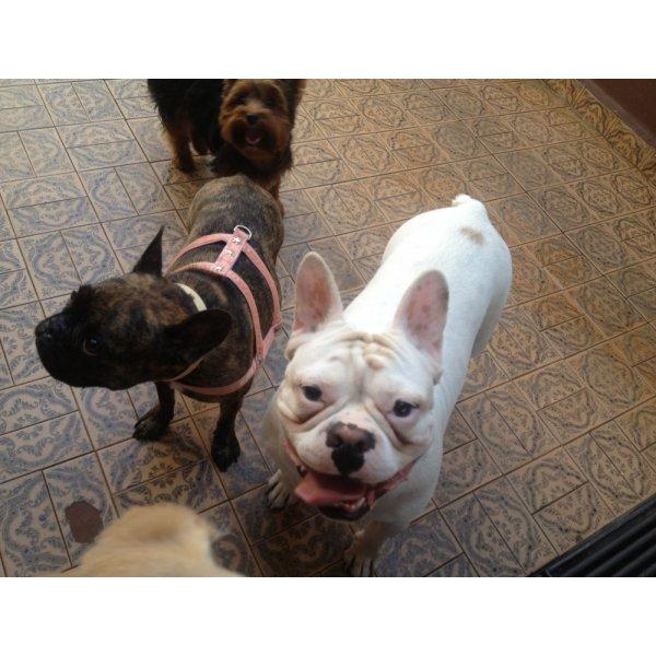 Hotel para Cachorro Preços no Alto de Pinheiros - Hotel para Cães no Bairro Campestre