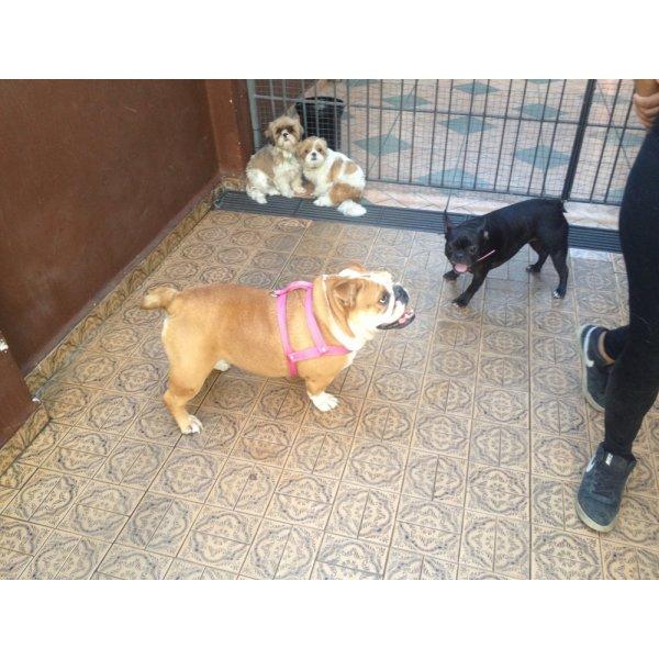 Hotel para Cachorro Quanto Custa em Média na Cidade Bandeirantes - Hotel Canil