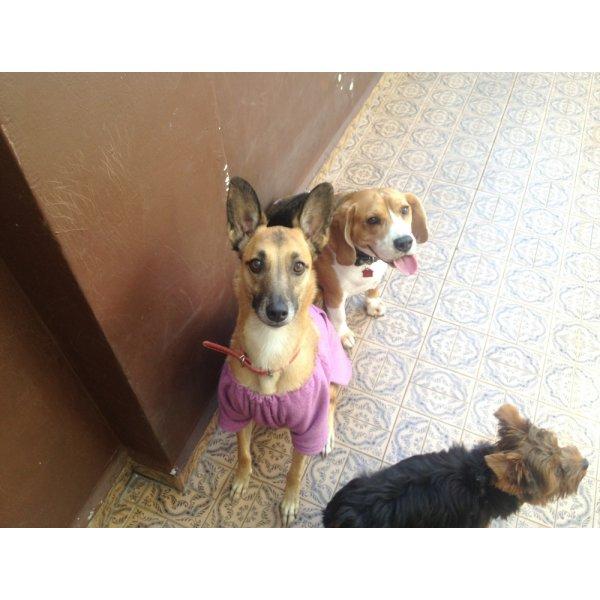 Hotel para Cachorro Quanto Custa no Ipiranga - Hotel para Cães no Bairro Olímpico