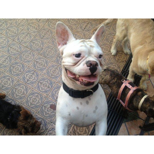 Hotel para Cachorro Valor no Jardim dos Bandeirantes - Hotel Canil