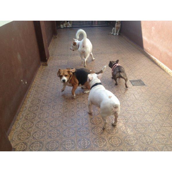 Hotel para Cachorro Valores no Alto da Lapa - Hotelzinho de Cães