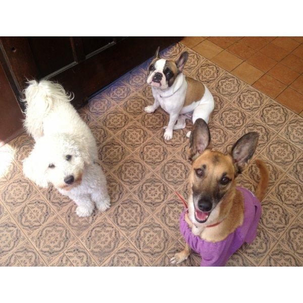 Hotel para Cachorros na Vila Ipojuca - Hotelzinho de Cães