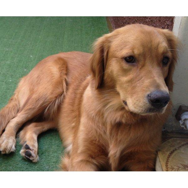 Hotel para Cães Contratar em Rolinópolis - Hotel para Cães no Bairro Campestre