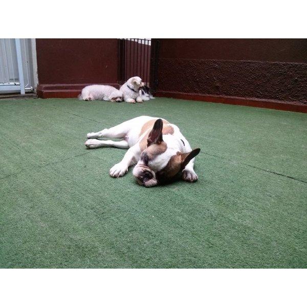 Hotel para Cães Preços no Jardim Previdência - Hotel para Cães em Santo André