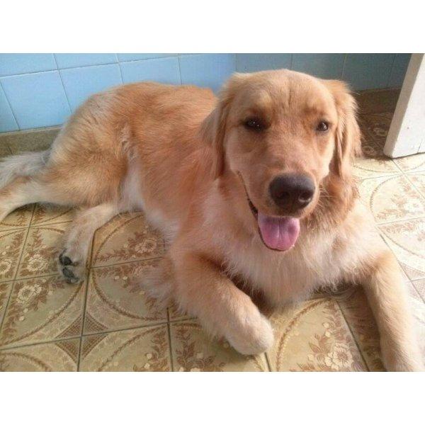 Hotel para Cães Quanto Custa em Média no Centro - Hotel para Cães em Santo André