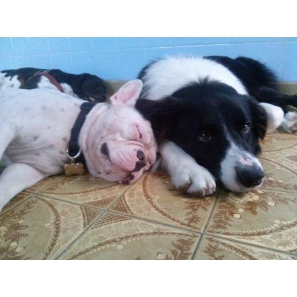 Hotel para Cães Valor no Ipiranga - Hotel para Cães em Santo André