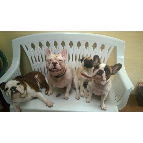 Hotel para Cão no Jardim Bonfiglioli - Hotelzinho para Cachorro