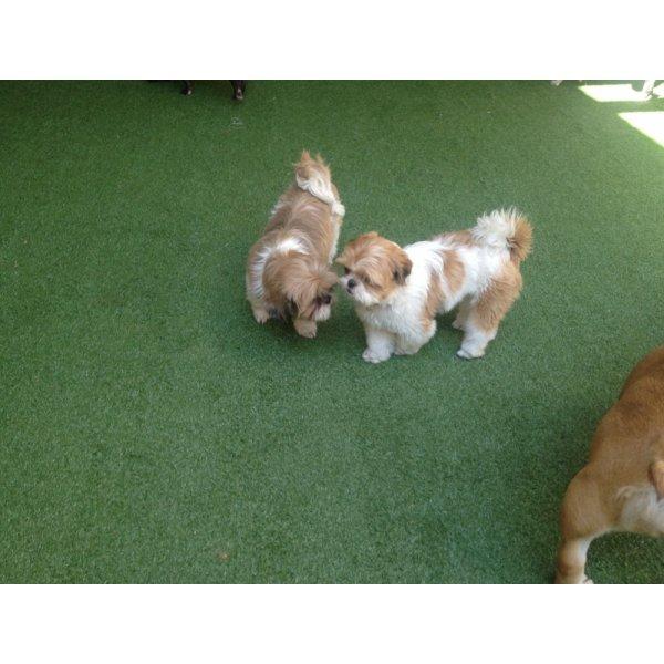 Hotel para Pets no Brooklin Velho - Hotelzinho de Cães