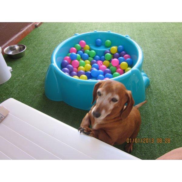 Hotel para Pets Onde Encontro no Jardim das Rosas - Hotel Canil