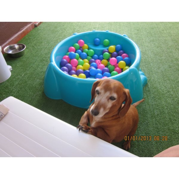 Hotel para Pets Onde Encontro no Jardim Santa Emília - Hotelzinho de Cães