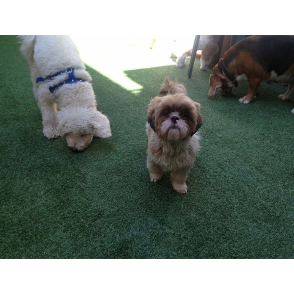 Hotel para Pets Onde Tem no Jardim Riviera - Hotelzinho de Cães