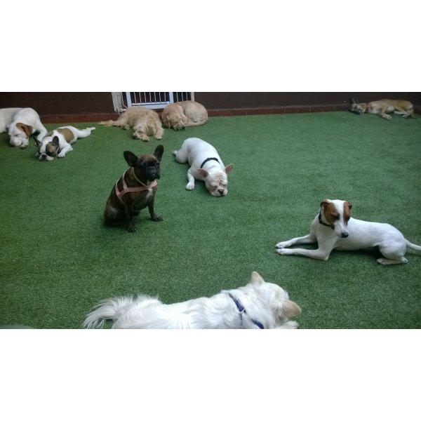 Hotel para Pets Preço na Vila Guaraciaba - Hotelzinho de Cães
