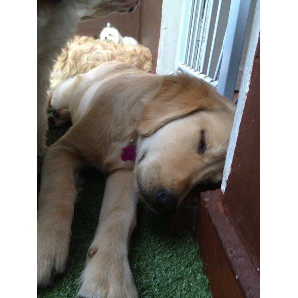 Hotel para Pets Quanto Custa na Chácara Flora - Hotel Canil