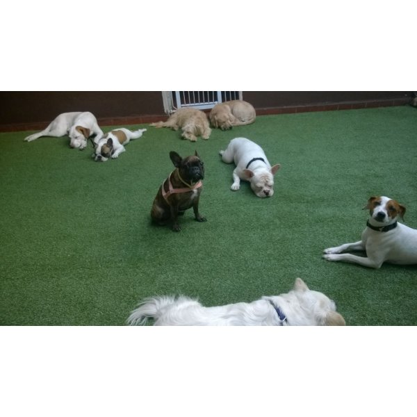 Hotel para Pets Valor na Vila Diadema - Hotelzinho de Cães