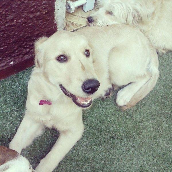 Hotelzinho para Cachorro Grande em Bela Aliança - Hotel para Cães no Bairro Campestre