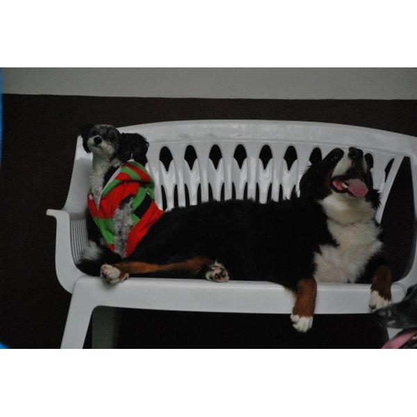 Hotelzinho para Cachorro Onde Achar no Jardim Novo Mundo - Hotelzinho para Cachorro