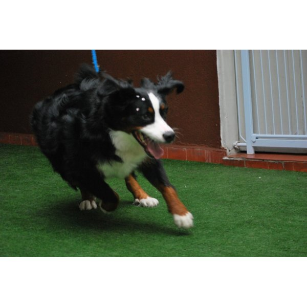 Hotelzinho para Cachorro Onde Encontro em Taboão - Hotel para Cães no Bairro Jardim