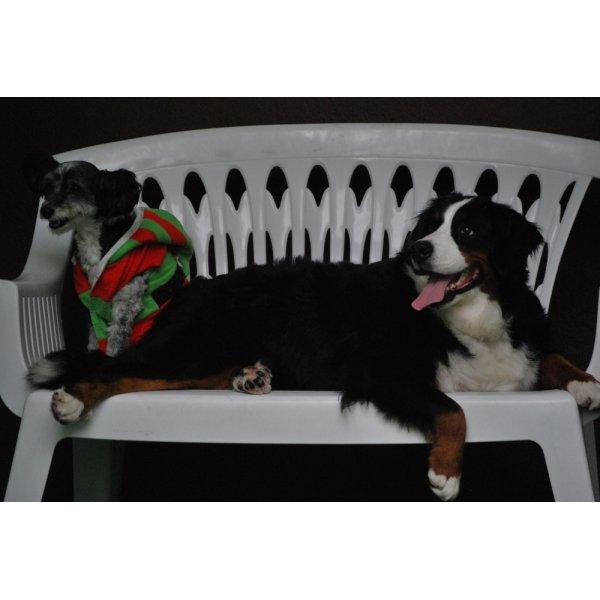 Hotelzinho para Cachorro Preciso Contratar no Alto do Ipiranga - Hotel para Cães no Bairro Jardim