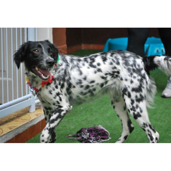 Hotelzinho para Cachorro Preço no Jardim Scaff - Hotelzinho para Cachorro