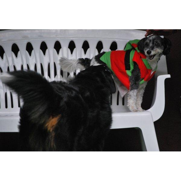 Hotelzinho para Cachorro Quanto Custa em Média no Centro Industrial Jaguaré - Hotelzinho para Cachorro