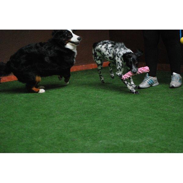 Hotelzinho para Cachorro Quanto Custa Mais Ou Menos na Vila Henrique Cunha Bueno - Hotel para Cães no Bairro Jardim