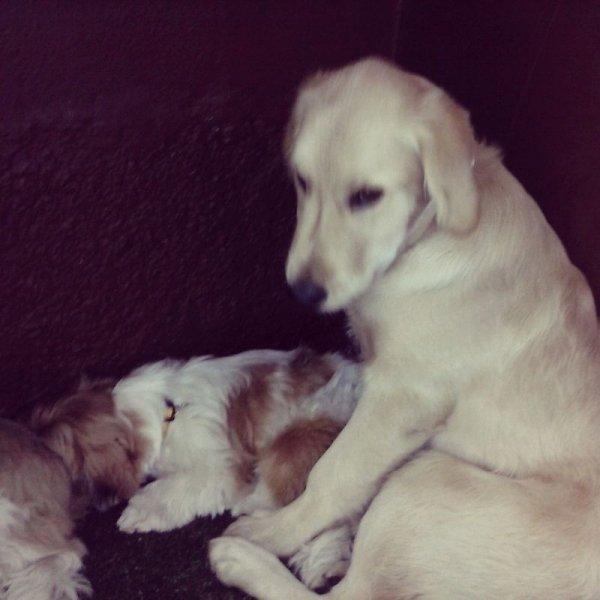 Hotelzinho para Cachorros Valor no Jardins - Hotel para Cães no Bairro Campestre